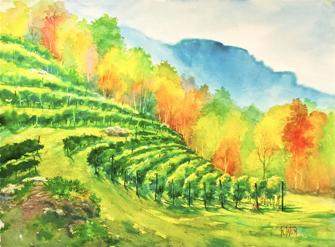 Grandfather-Vineyard